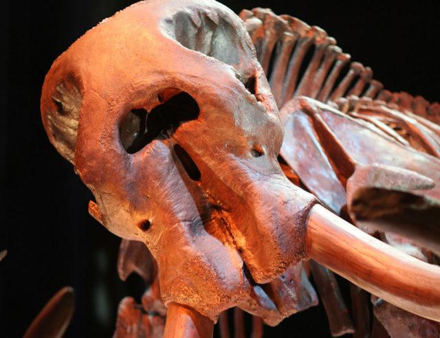 Mastodonte LA