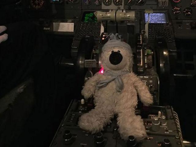 Teddy: photo 3