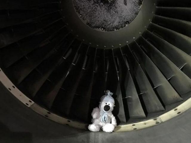 Teddy: photo 4