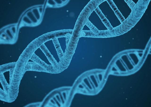 Modifications génétiques
