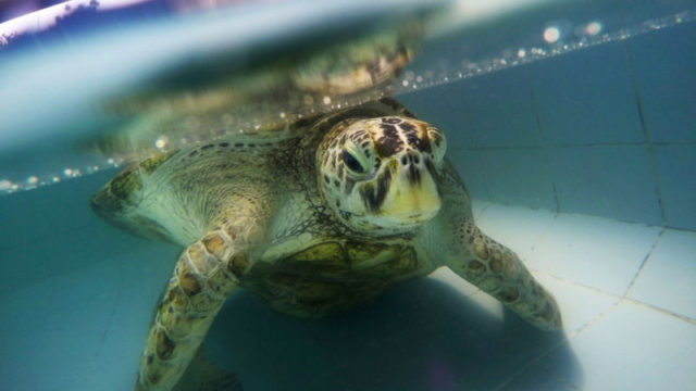 TORTUE-PIECES