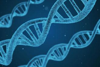 ADN sédiments