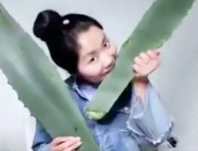 Pensant mâcher de l'aloe vera, une blogueuse s'empoisonne devant les internautes