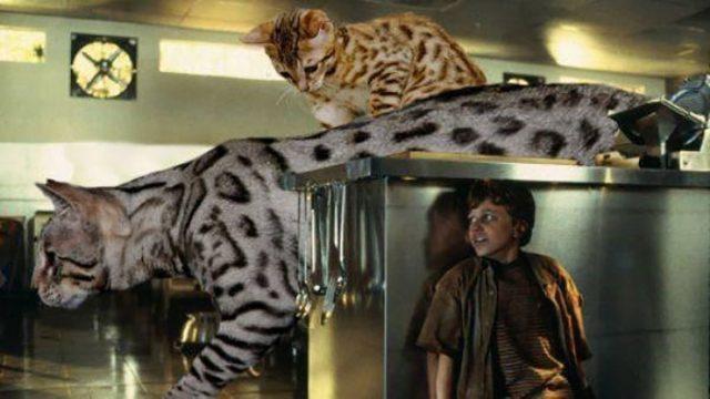 Jurassic Cat : image 10