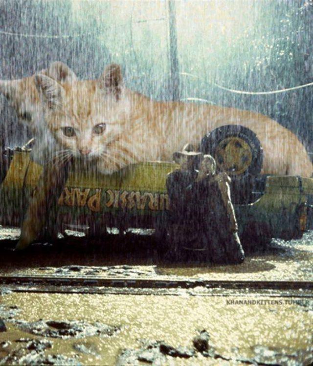 Jurassic Cat : image 3