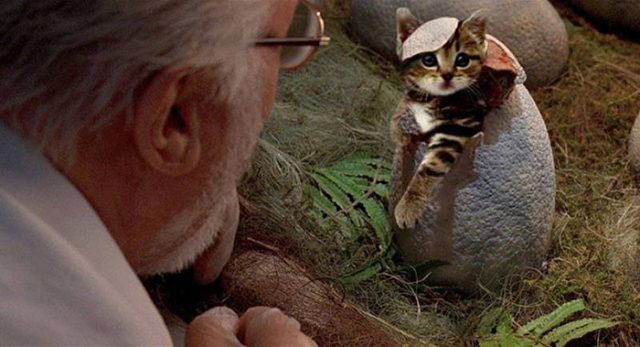 Jurassic Cat : image 4