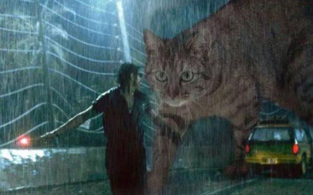 Jurassic Cat : image 6