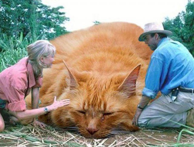 Jurassic Cat : image 7