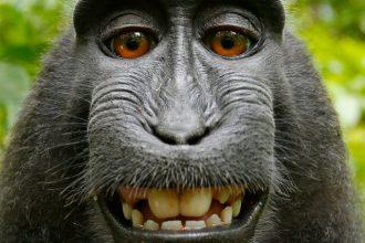 Selfie Singe