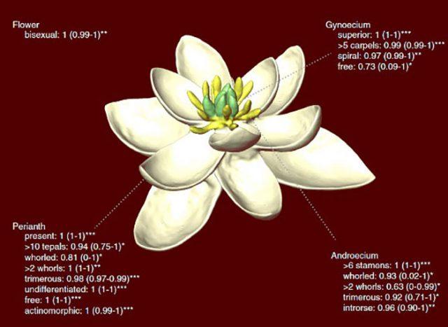 Fleur CNRS