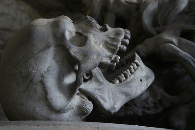 Ces dents retrouvées en Europe pourraient réécrire l'histoire de l'humanité