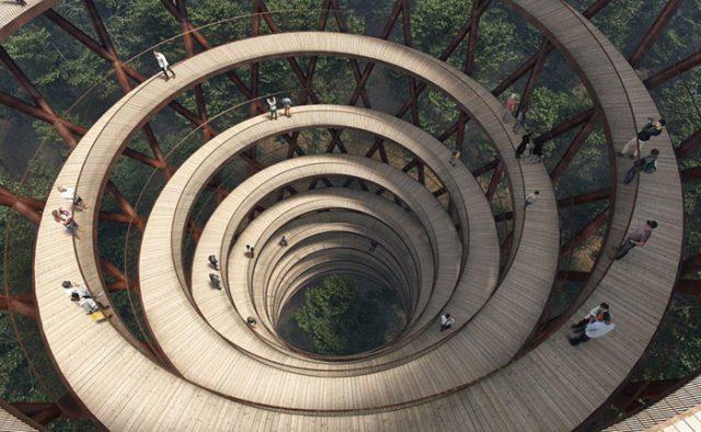 Camp Adventure Treetop Experience : image 2