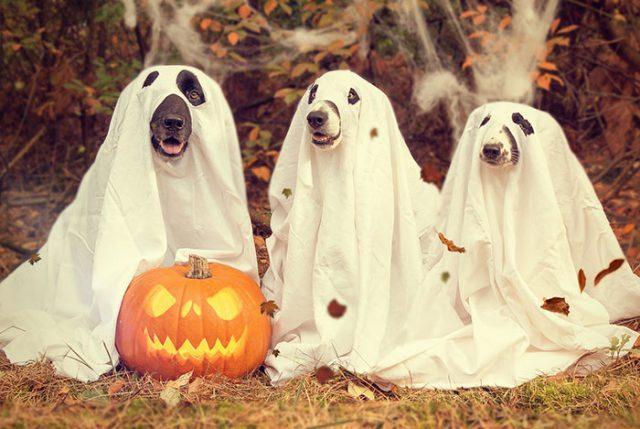 Halloween Steam