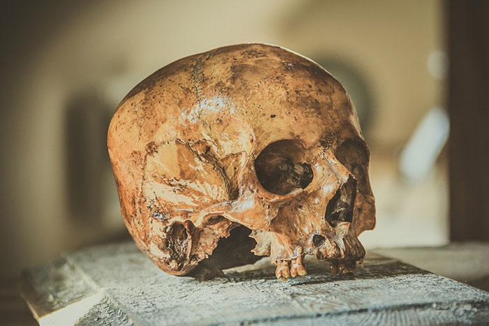 Suède : de mystérieux crânes empalés sur des pieux ont été retrouvés à Kanaljorden