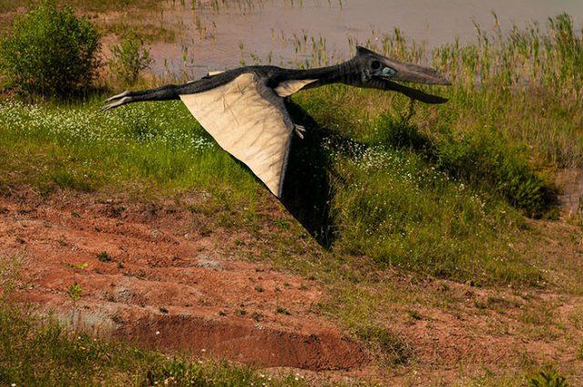 Dinosaures les restes d 39 un gigantesque pr dateur volant - Jeux de dinosaure volant ...