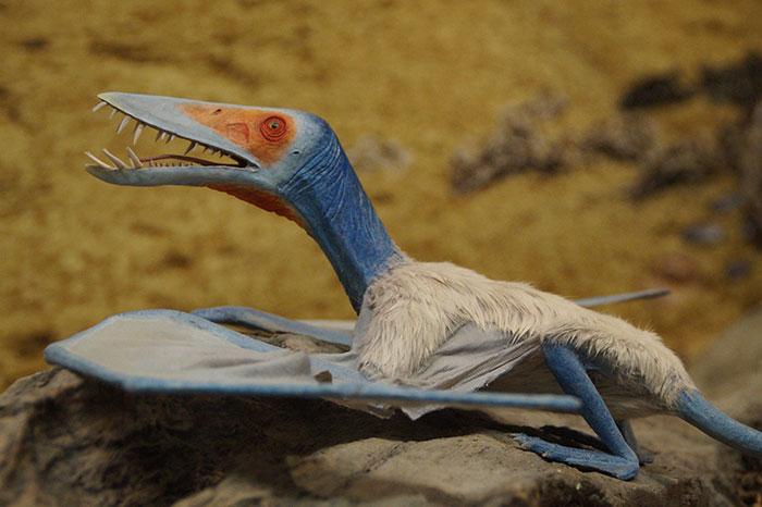 Découverte d'oeufs de ptérosaure en Chine