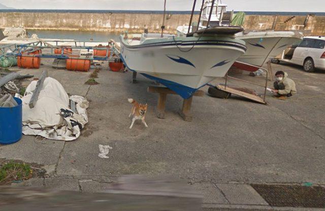 Chien Google Street View