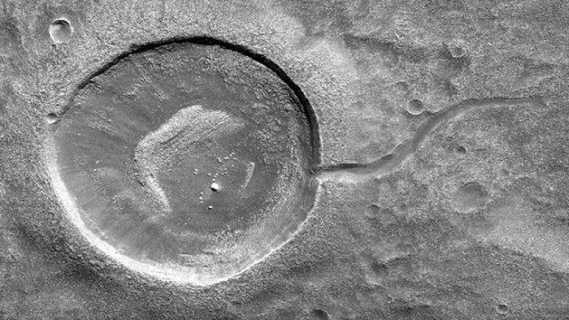Un têtard sur Mars