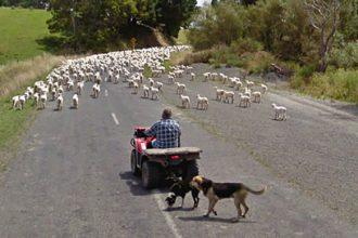 Moutons Google Maps