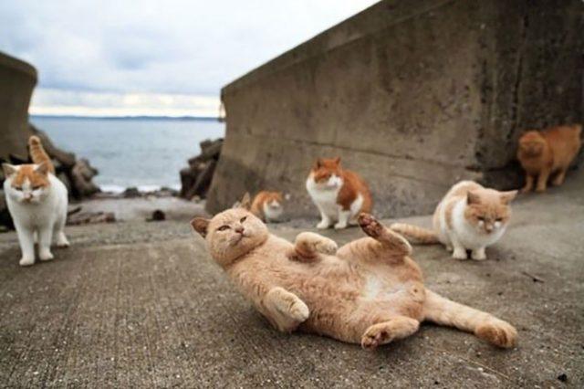 L'île aux chats, au Japon