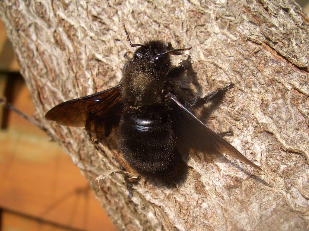 Les larves de scarabées se servent du sexe pour attirer leur proie