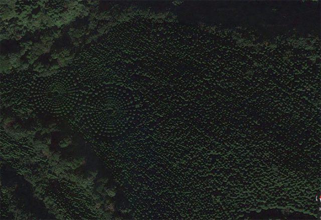 Crop Circles Arbres