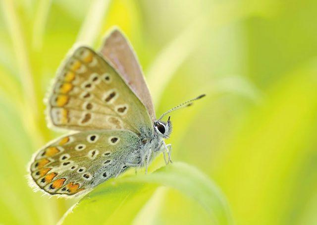 butterflies-95358_1920
