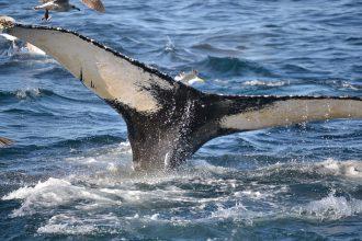 Une baleine à bosse a été retrouvée dans la jungle brésilienne et personne ne sait comment elle est arrivée là