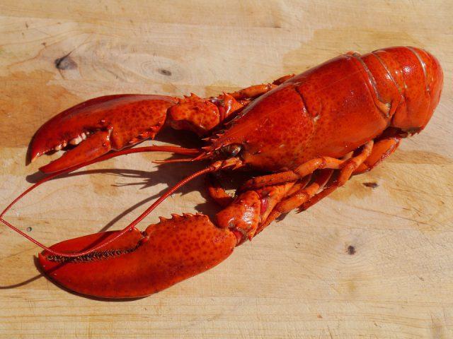 Des chercheurs du MIT s'inspirent du homard pour créer des gilets pare-balles
