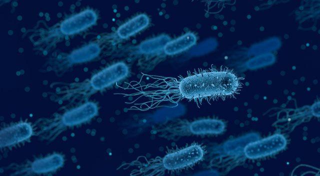 MicrobialEcology : l'infiniment petit a aussi sa place sur Instagram