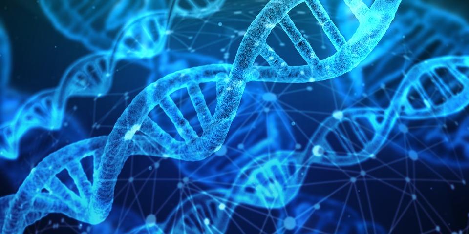 La découverte de nouvelles molécules inhibitrices améliorerait la précision de CRISPR pour l'édition génétique