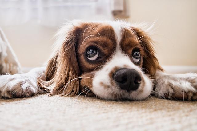 """Le PETA aimerait se débarrasser du terme """"animal"""""""