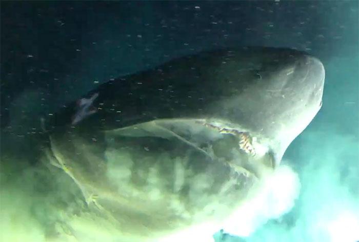 Des scientifiques ont réussi à filmer un ancien requin extrêmement rare vivant dans les profondeurs des océans