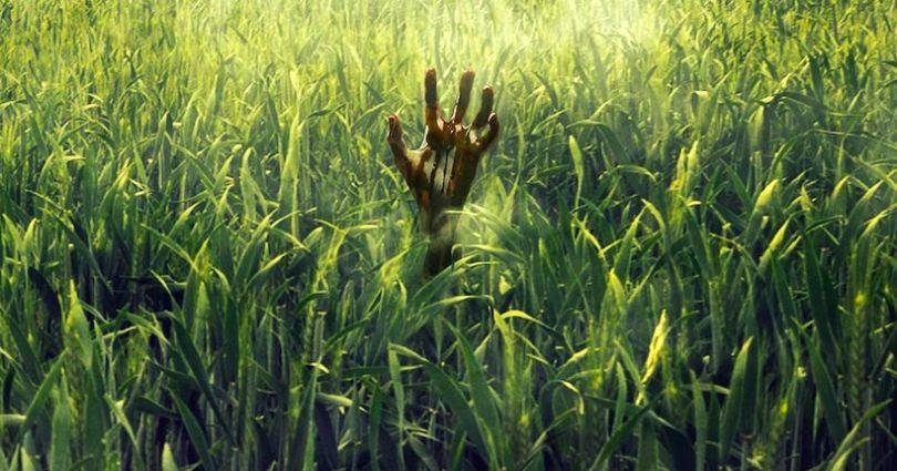 In the Tall Grass, adaptation de Stephen King par Netflix, a droit à son premier trailer