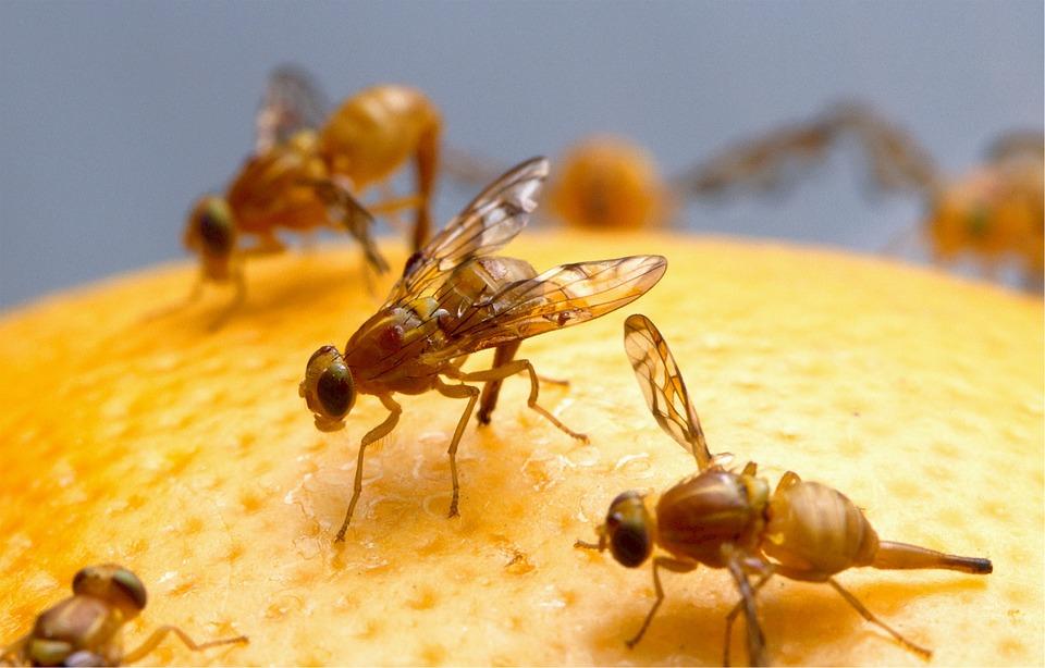 Une étude a montré que la lumière bleue produite par les LED peut faire pourrir le cerveau des mouches de fruits