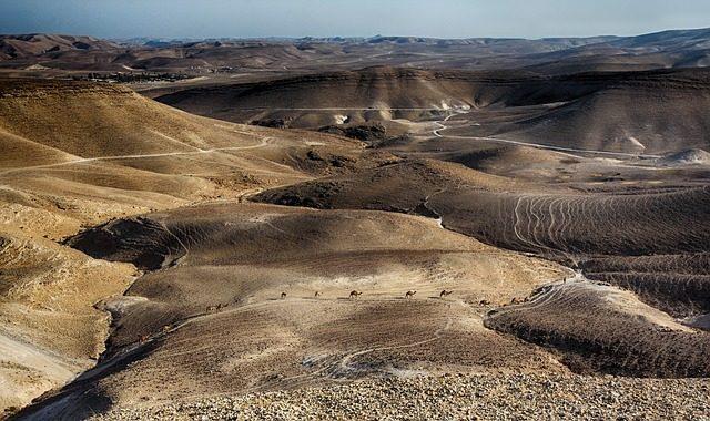 Des fouilles en plein désert