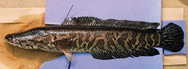 site de rencontre du poisson au Royaume-Uni