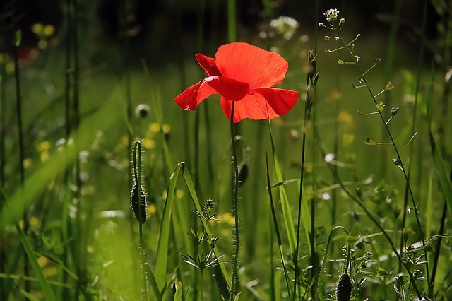 Une fleur dans un jardin