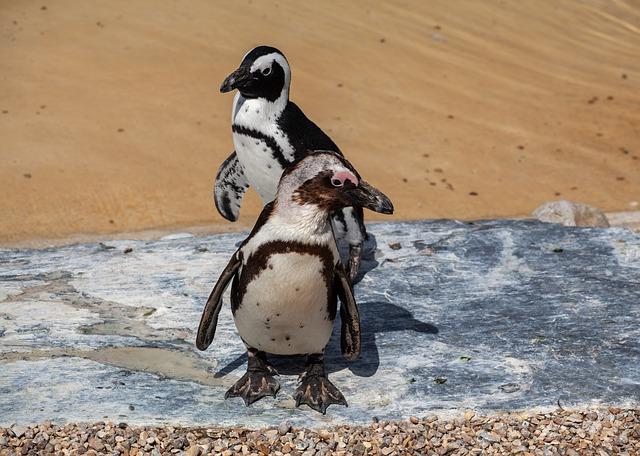 Deux pingouins gays ont voulu avoir leur propre œuf et en ont ainsi volé un à leurs voisins