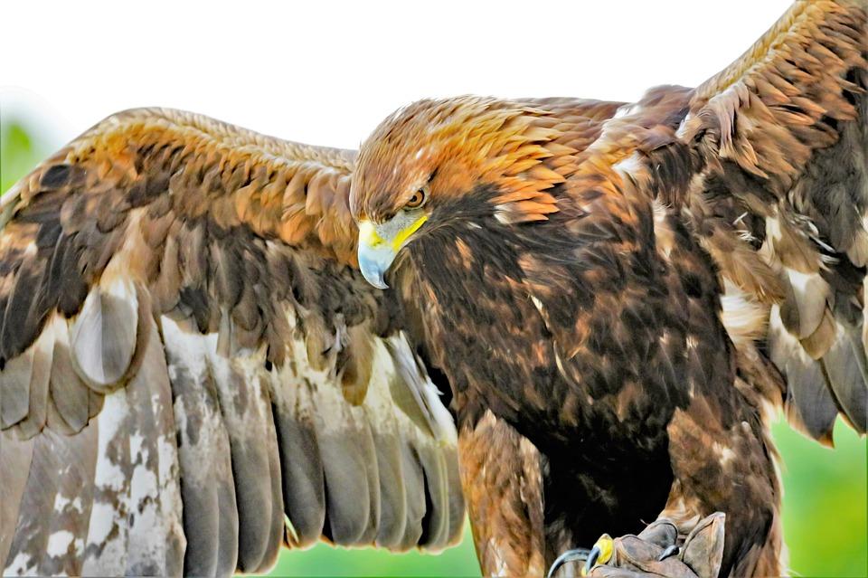 Lost : le mystère autour du « Hurley Bird » enfin expliqué