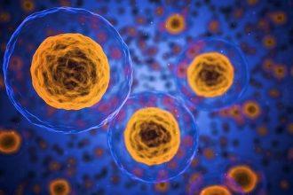 Une photo de cellules humaines