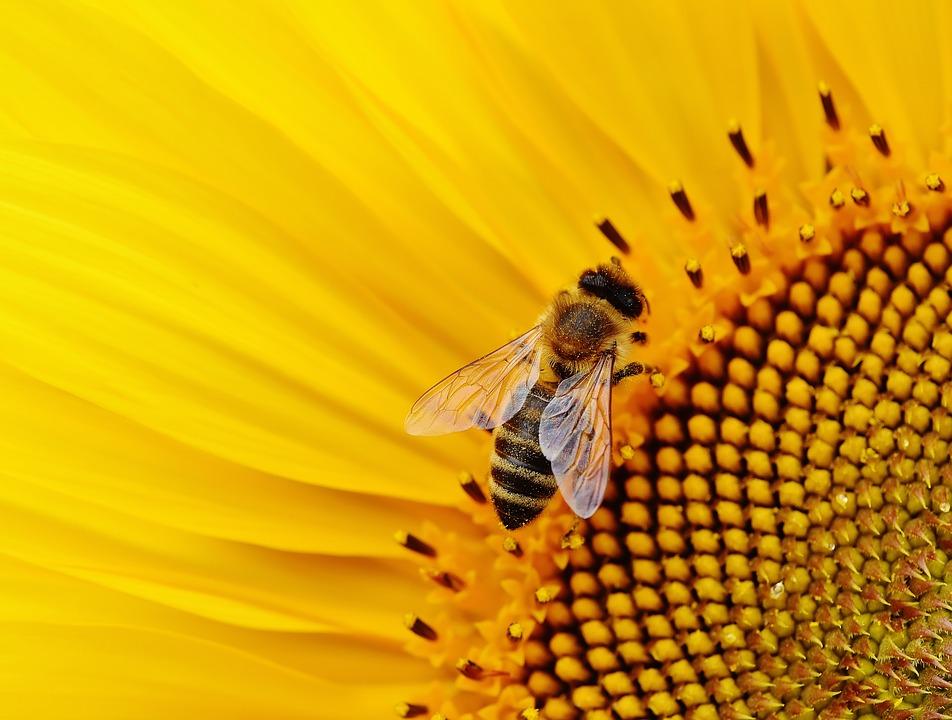 500.000 espèces d'insectes risquent de disparaître du fait de l'homme et de ses activités, disent les chercheurs