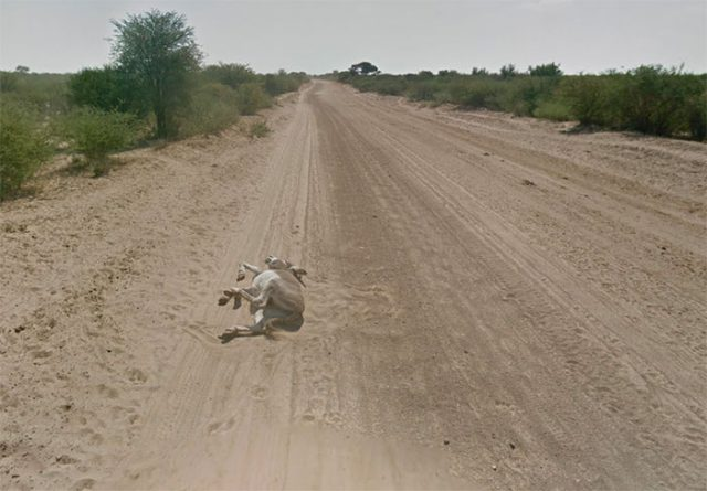 La Google Car croisent parfois des animaux, mais ils ne sont pas tous en bon état