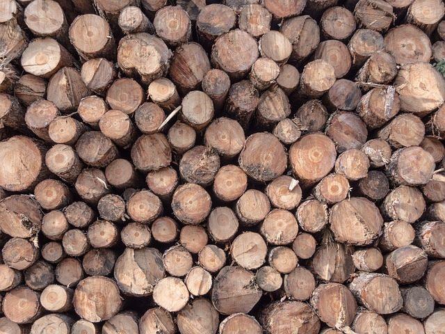 Une pile de rondins en bois