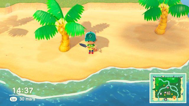 Les fruits récupérés sur les îles mystère peuvent se revendre à prix d'or... ou être plantés sur votre île.