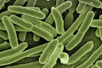 Une colonie d'E. coli vue au microscope électronique