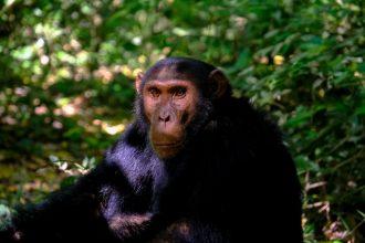 Un singe assis dans la jungle