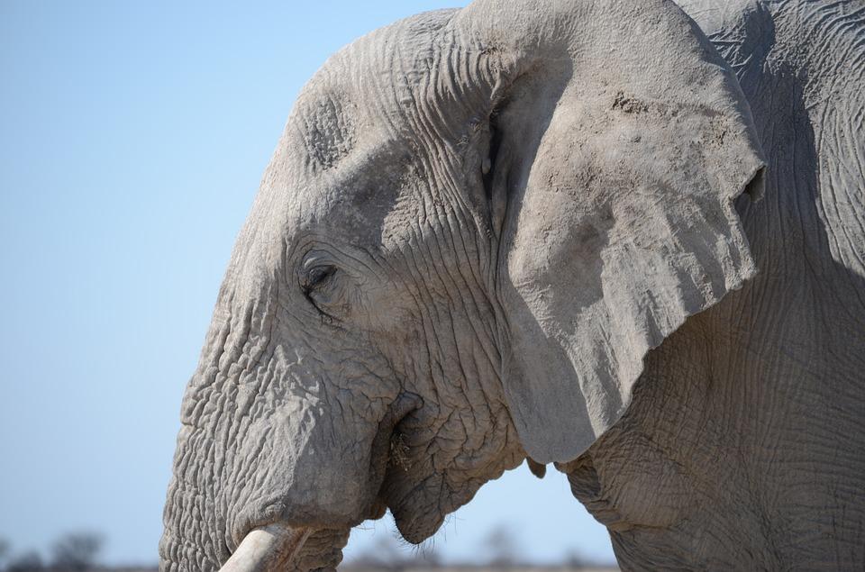 tete-elephant