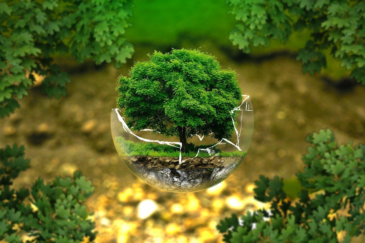 Une photo symbolisant la nécessité de placer l'écologie au coeur de nos priorités