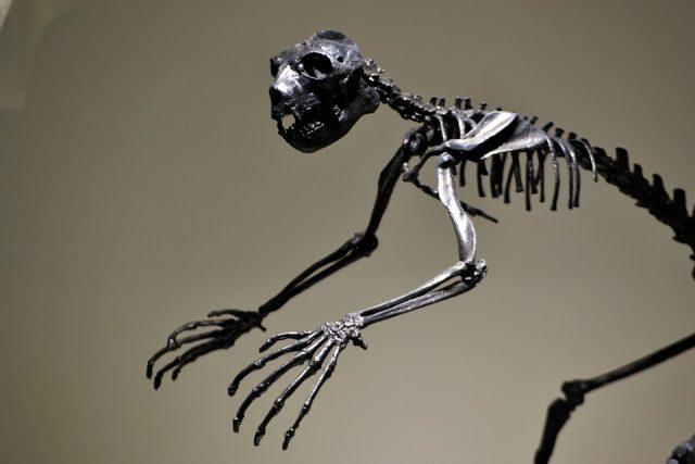 """Des paléontologues ont mis la main sur un mammifère """"très bizarre"""" qui a vécu il y a 66 millions d'années"""